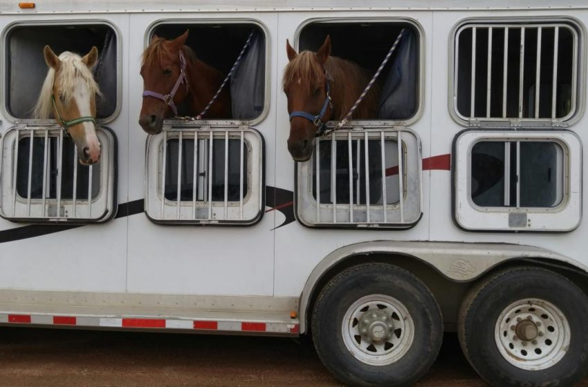 Shipment of A Horse – Tips to Help You with The Easy Relocation of Your Pet